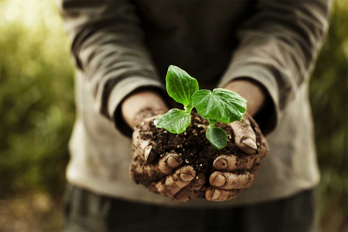 Man holding plants in soil in his hands