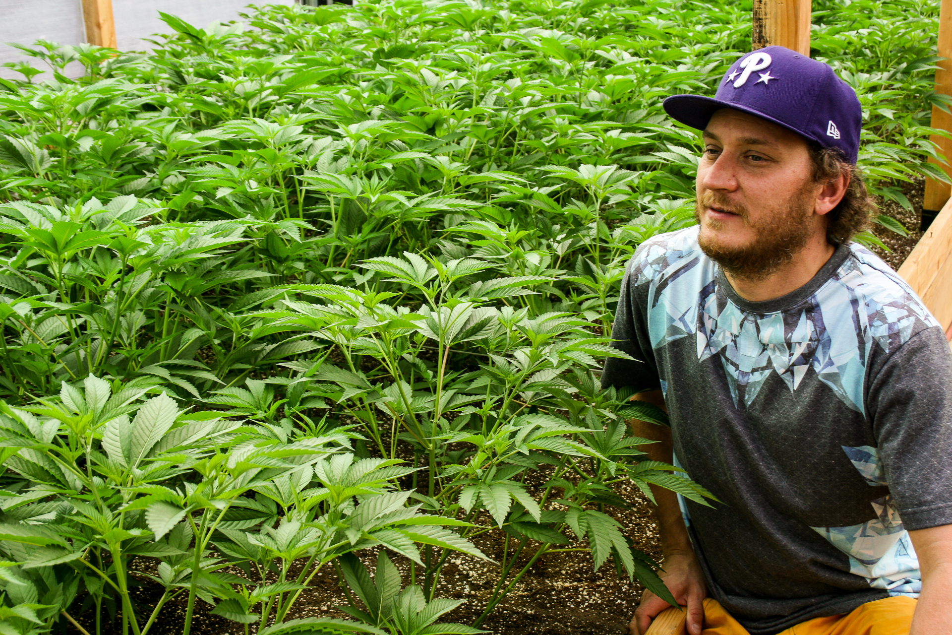 Stephen Gieder kneeling by cannabis plants